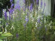 garden_b.jpg